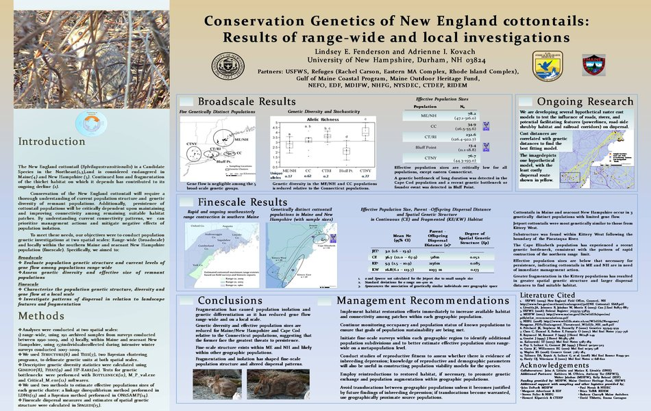 Conservatio Genetics Of New England Cottontails by akovach