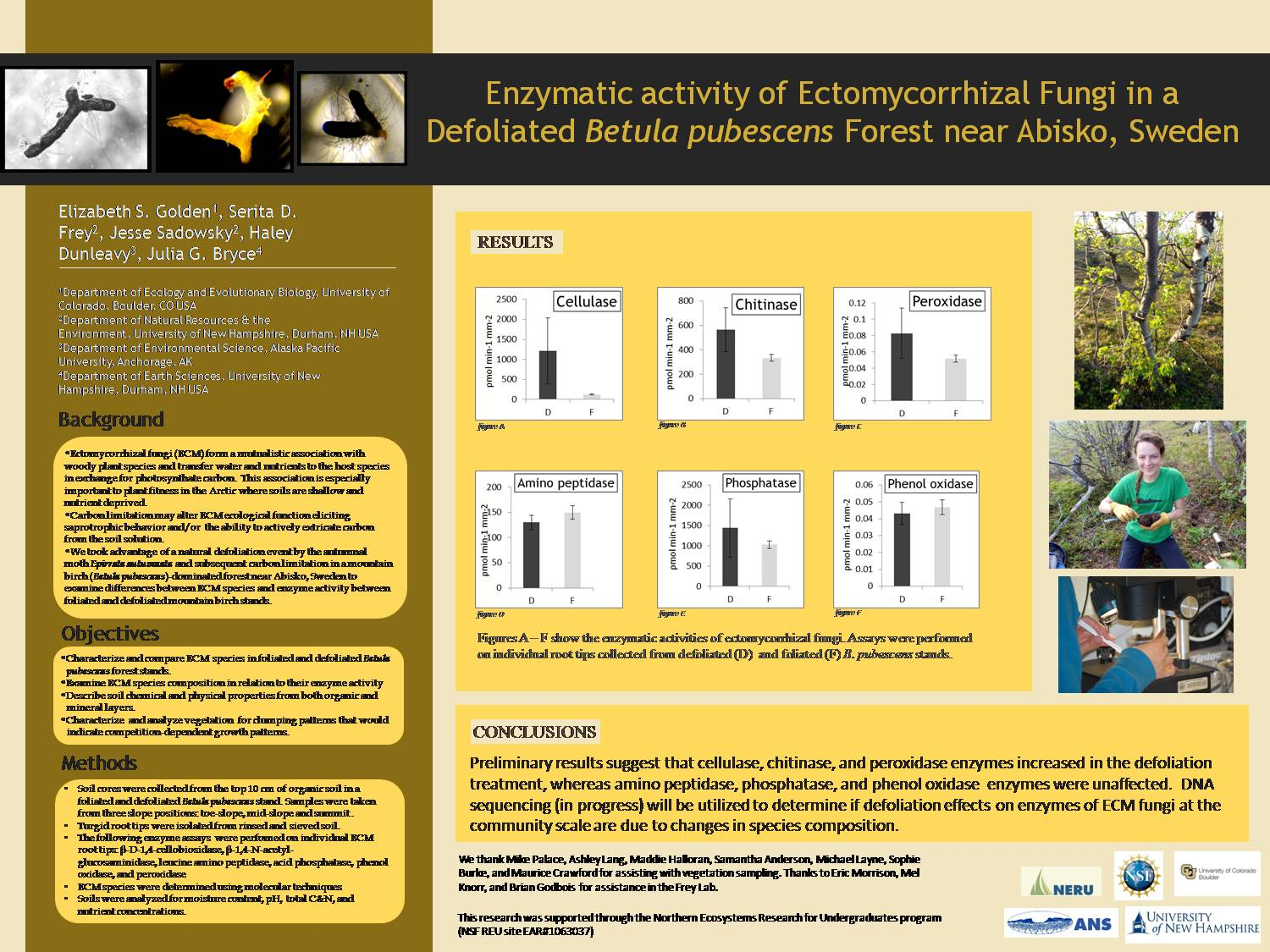 Enzymatic Activity Of Ectomycorrhizal Fungi In A  Defoliated Betula Pubescens Forest Near Abisko, Sweden  by elimaygolden