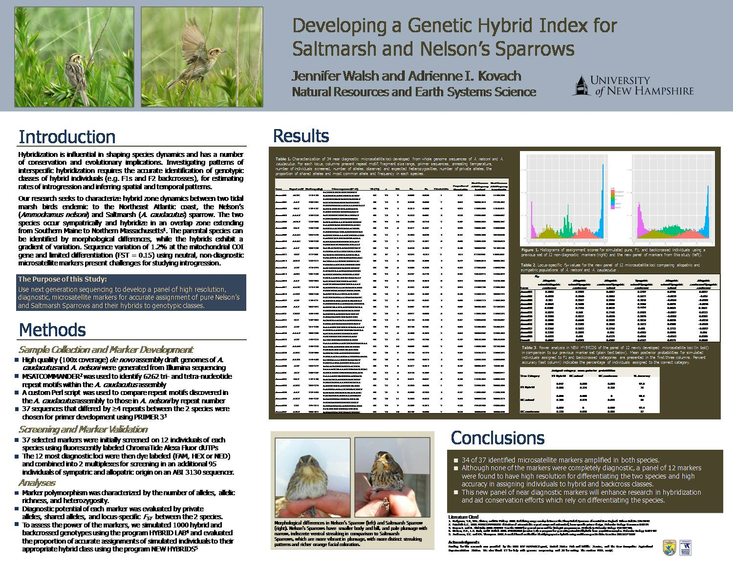 Developing A Genetic Hybrid Index For Saltmarsh And Nelson's Sparrows by jenwalsh27