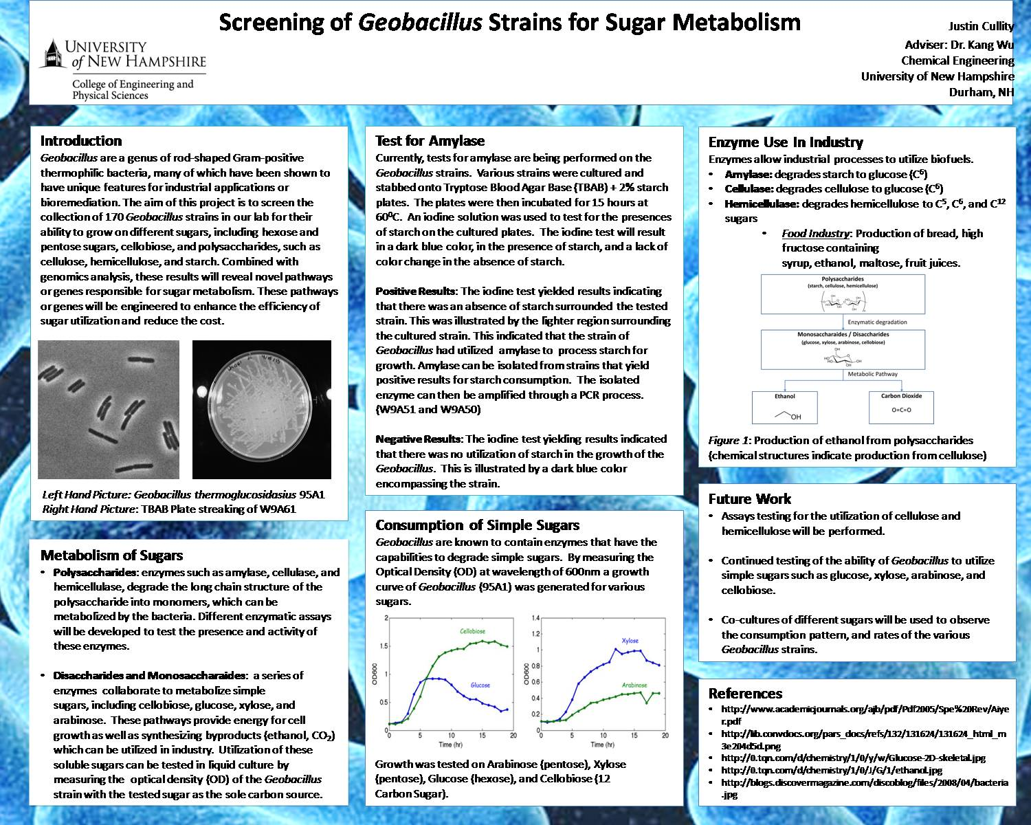 Screening Of Geobacillus Strains For Sugar Metabolism by jrq97