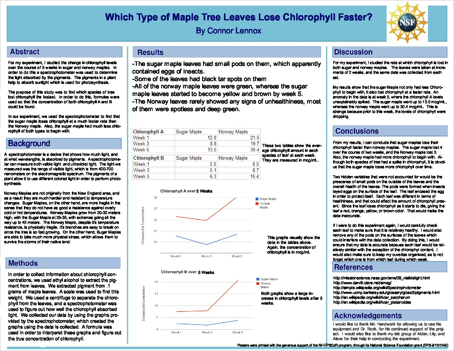 Which Type Of Maple Tree Leaves Lose Chlorophyll Faster? by mchandwork