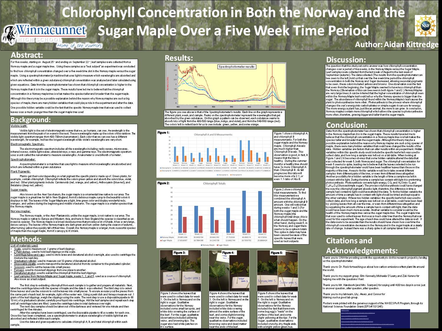 Chlorophyll Concentration In Both The Norway And The Sugar Maple Over A Five Week Time Period by mchandwork