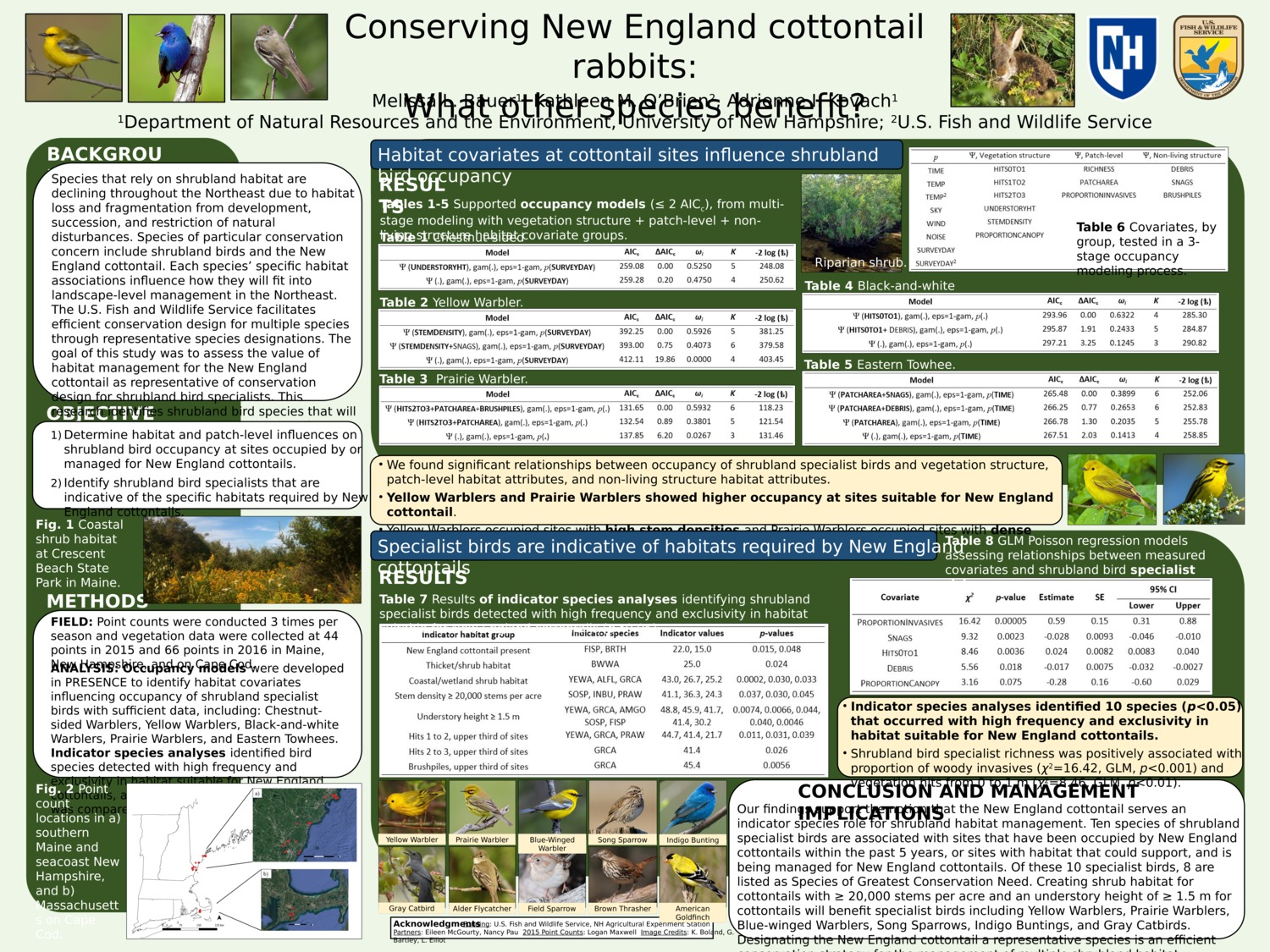 Conserving New England Cottontail Rabbits: What Other Species Benefit? by mle1003