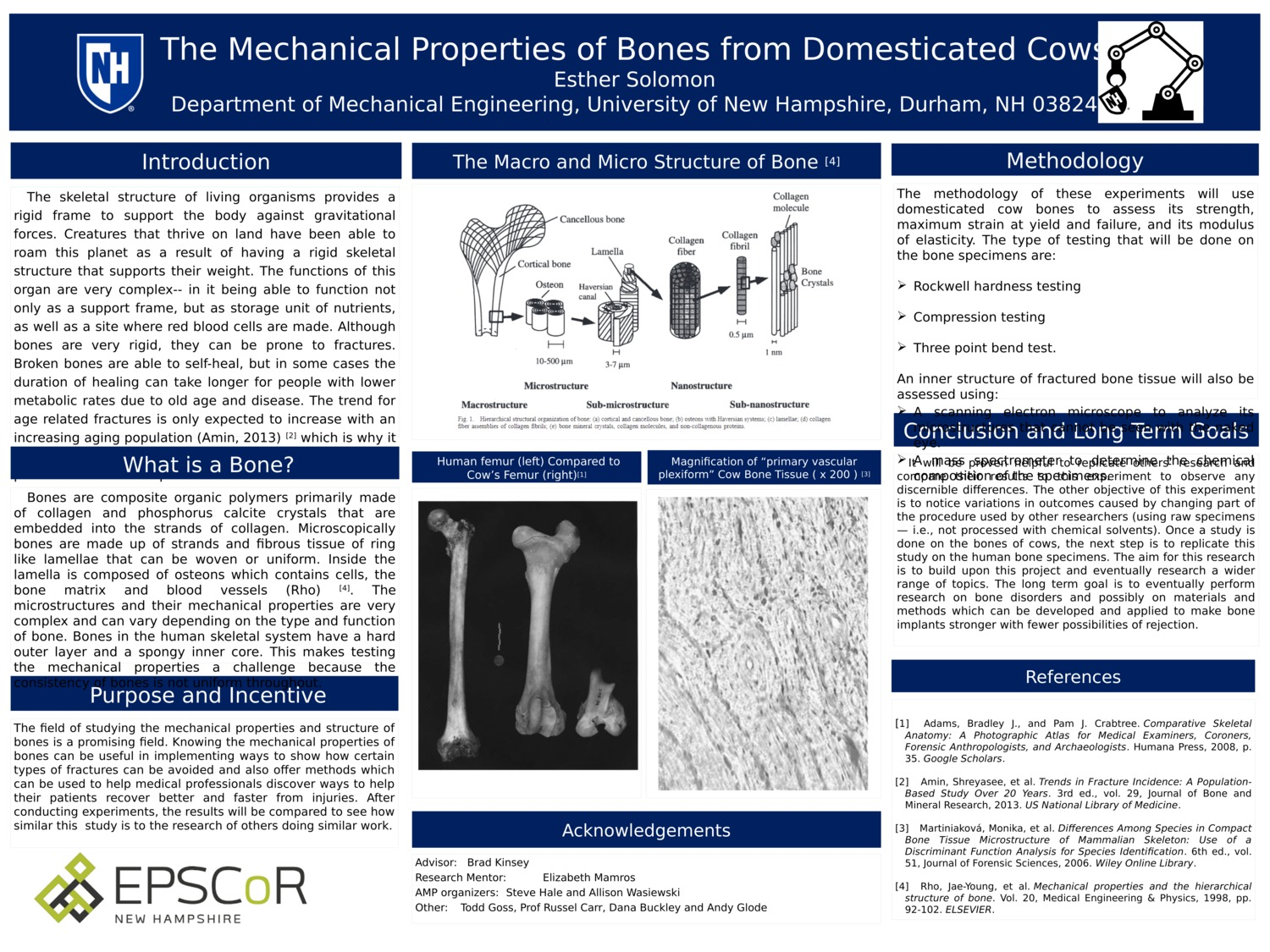 The Mechanical Properties Of Bones From Domesticated Cows by ehs1024